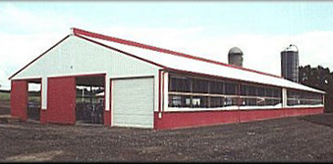 Agricultural-Building-Slotted-Floor-Dairy-Facility